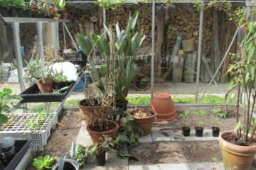 Kas planten overwinteren