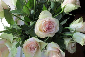 rozen, bos rozen