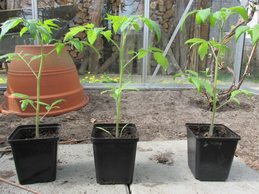 verspeende tomaten