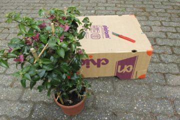 planten vervoeren