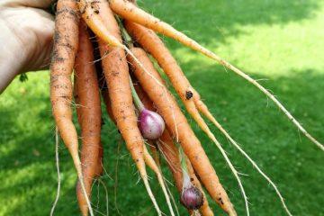 wortel en ui door elkaar