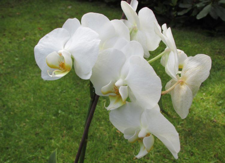 Orchideeën: zo verzorg je ze