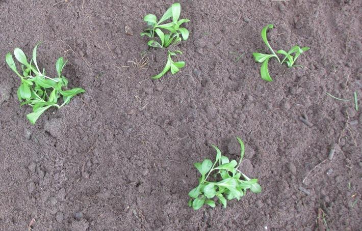 duizendschoon uitgeplant