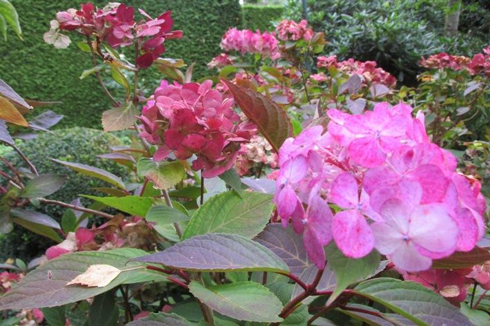 Planten die meekleuren met de herfst