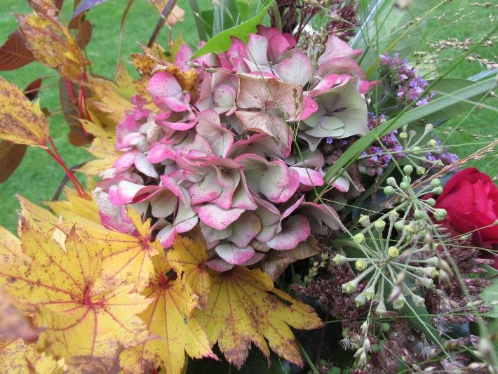 japanse esdoorn, hortensia, roos (pussta), diamantgras, sedum