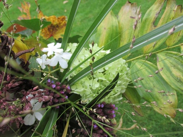 viburnum mariesii, annabelle, miscantus, diamantgras, esdoornblad, koninginnekruid (eupatorium) verbena bonariensis