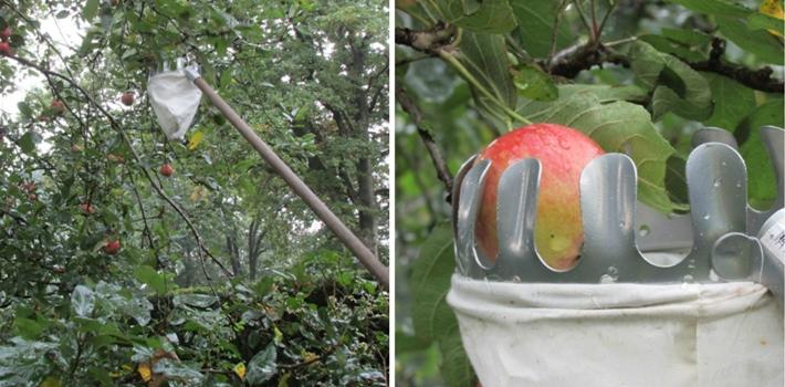 appelplukker collage
