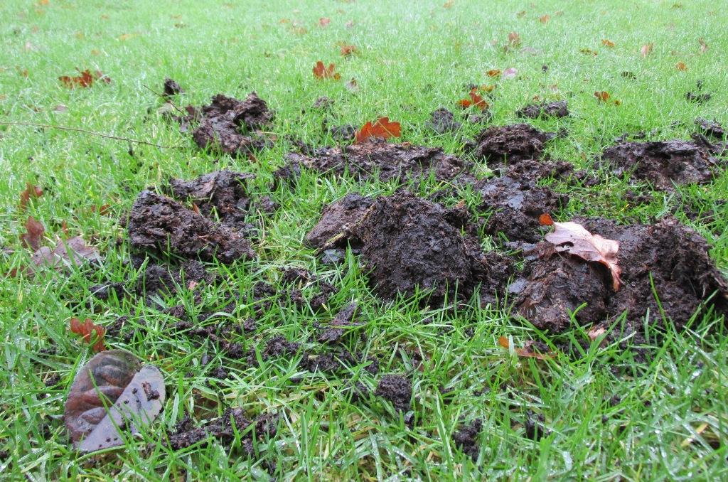 compost op gazon