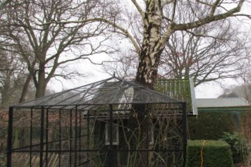 berkenboom volière