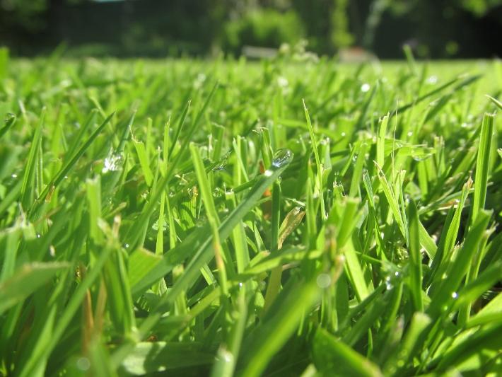 gazon grassprietjes