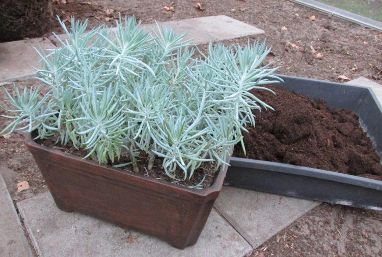 Kamerplanten verpotten of de potgrond vernieuwen