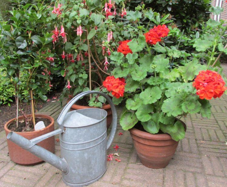 potten planten