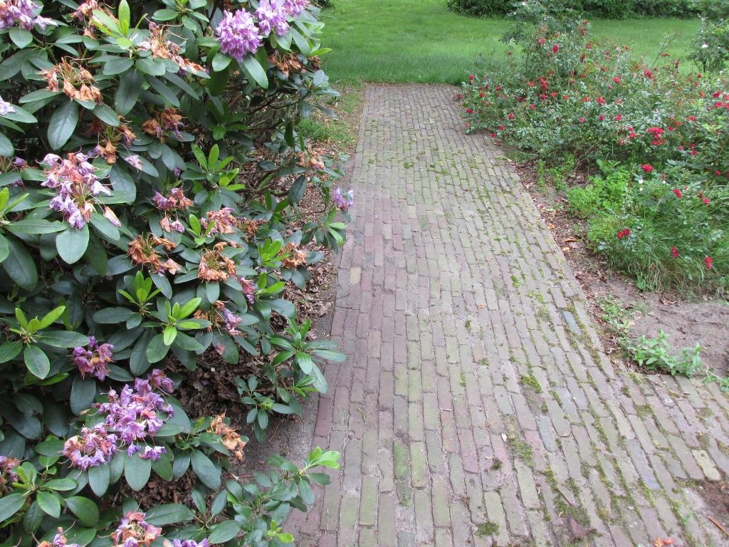 rododendron snoeien na