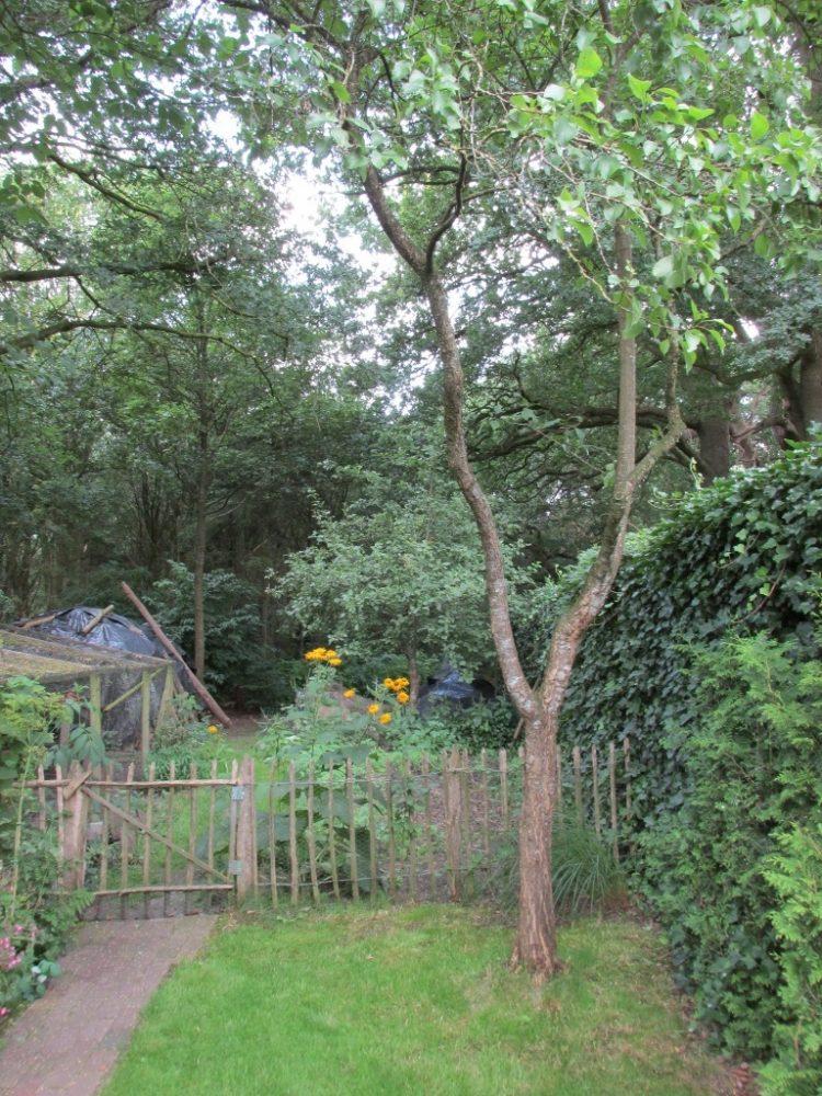 Steenvruchtbomen (prunus) bemesten