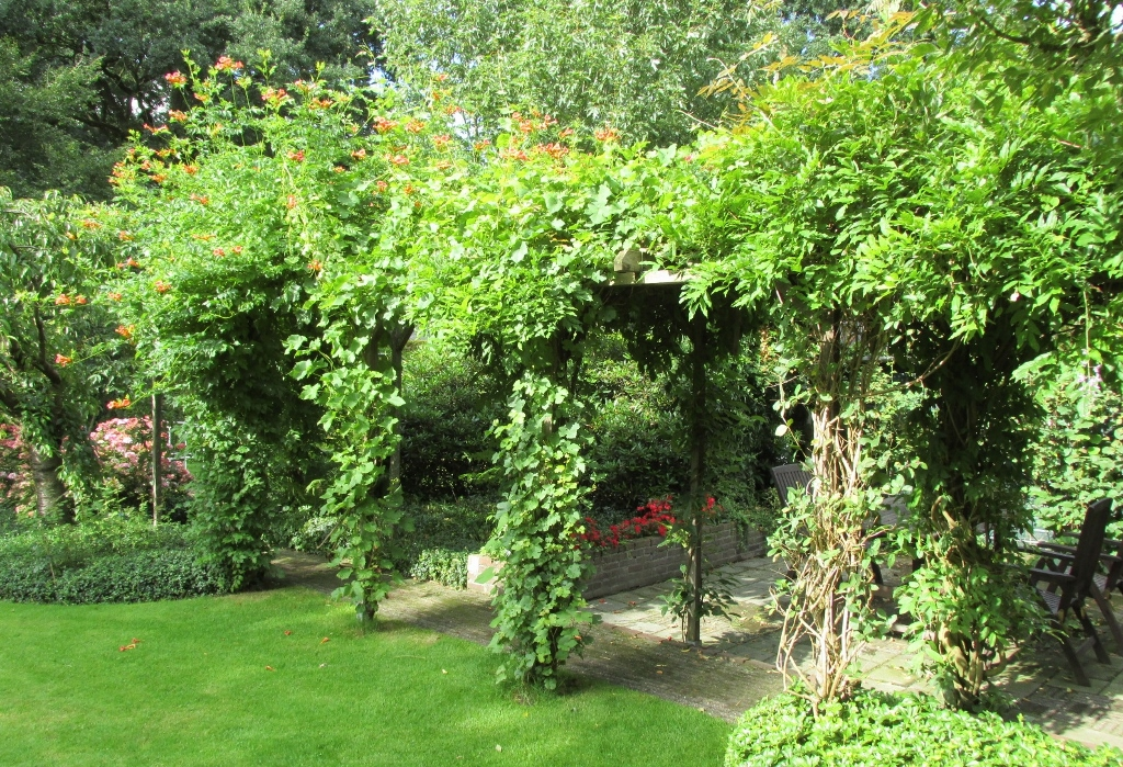 Welke klimplanten zijn geschikt voor een pergola onderhoud - Bank voor pergola ...