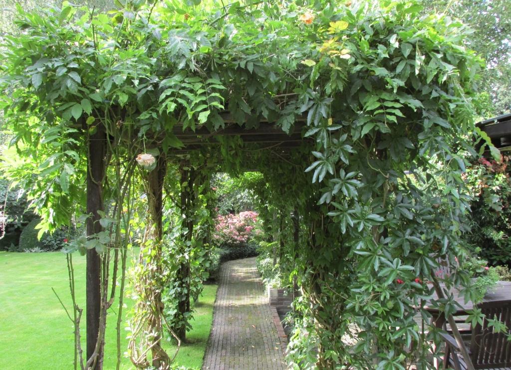 Welke klimplanten zijn geschikt voor een pergola onderhoud - Pergola klimplant ...