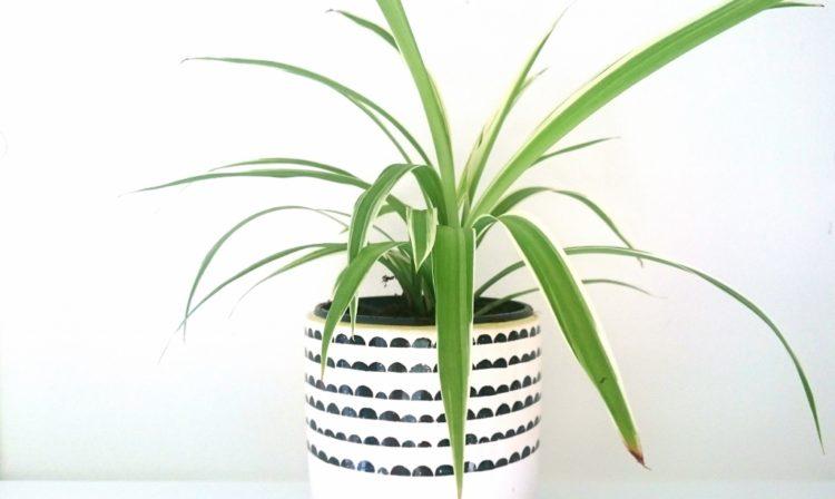Water en groene zeep: huis- tuin- en keukenmiddeltje tegen luis bij planten