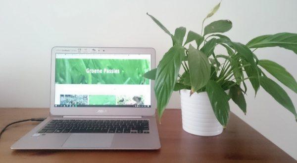 kantoorplant