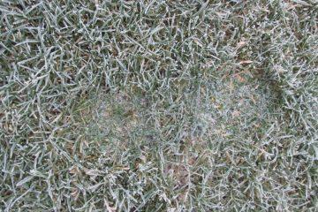bevoren-gras-voetstap