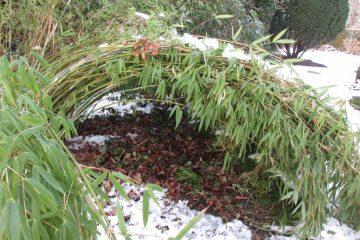sneeuw bamboe