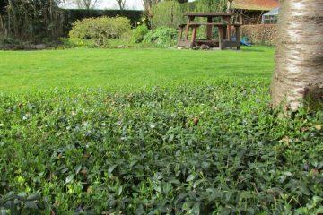 onderhoudsarme tuin vinca