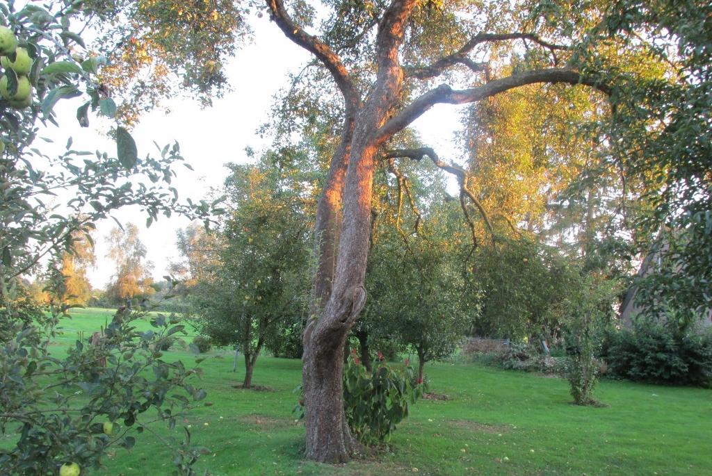 open appelboom
