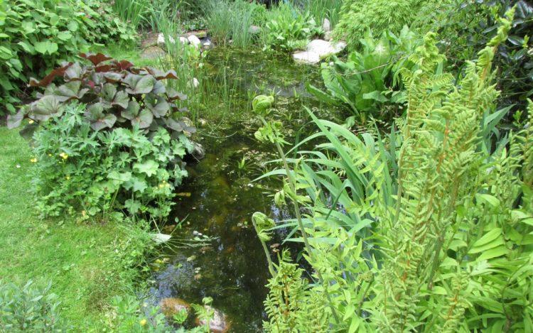 Hoeveel zuurstofplanten heb je nodig per kubieke meter vijverwater?