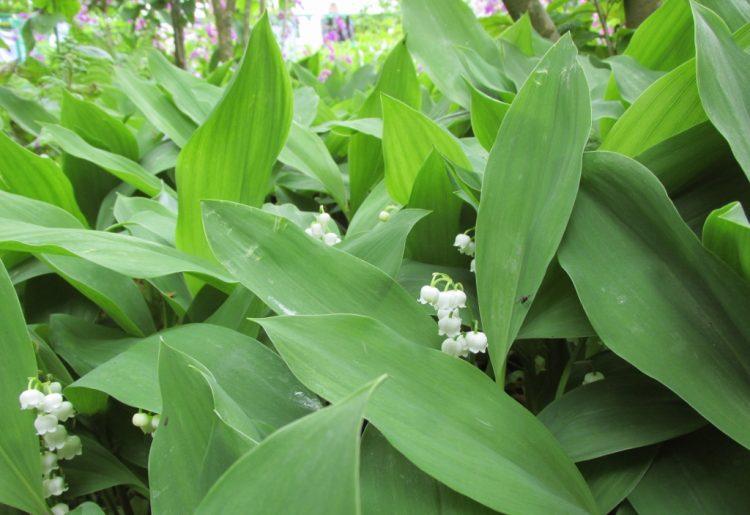 Deze 8 planten groeien goed in de schaduw