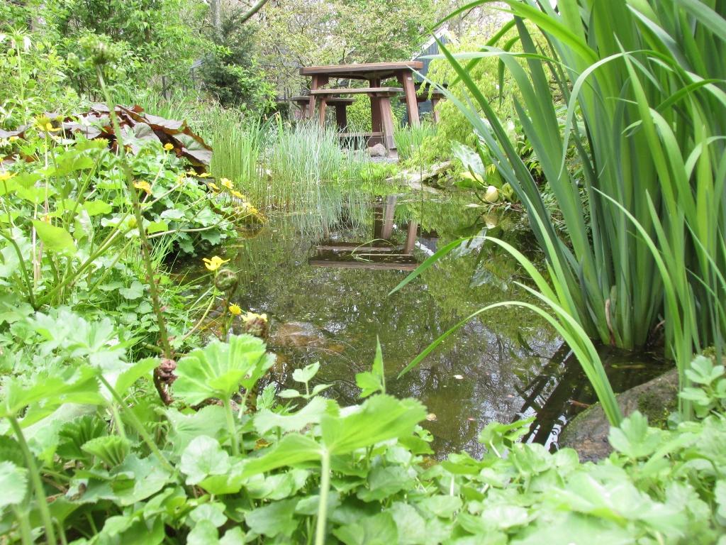 Zuurstofplanten nodig om een vijver op gang te brengen for Een vijver