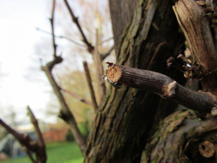 Bomen & sapstromen: wat als je boom is gaan bloeden?