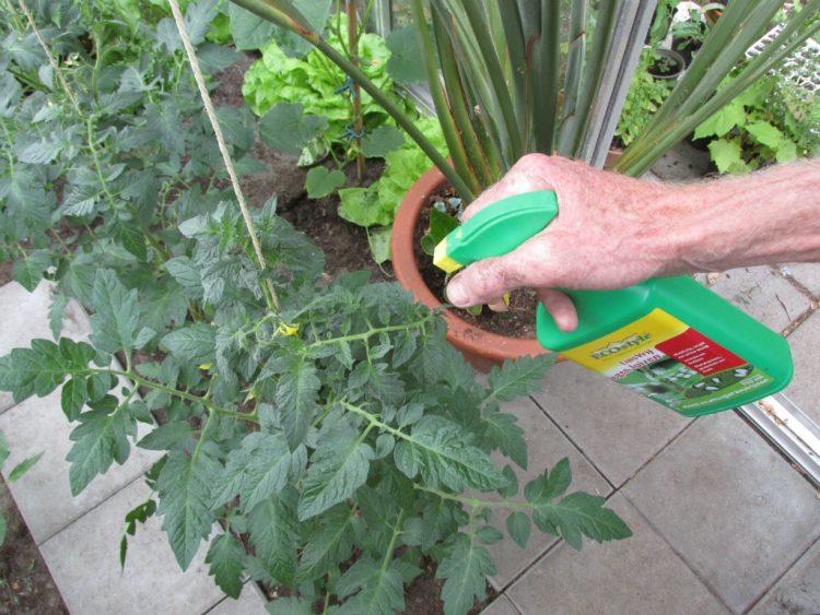 Herkennen en voorkomen van phytophthora (aardappelziekte)