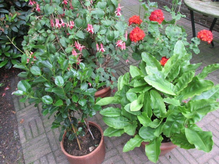 potgrond potten bloemen