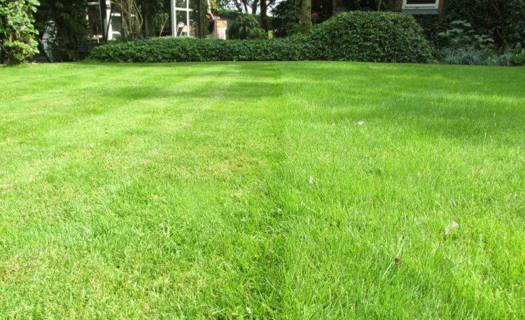 Hoe kort kun je je gras maaien?