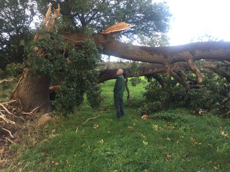 Takken van de boom gebroken door storm? Geen probleem!