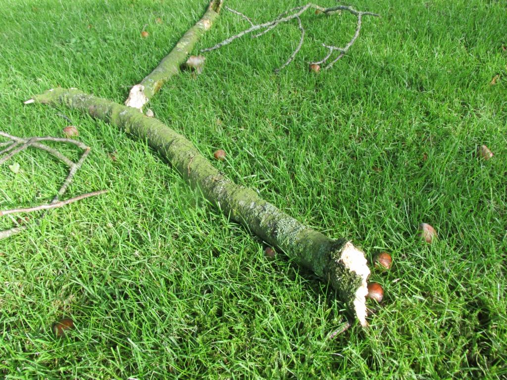 herfststorm afgebroken tak