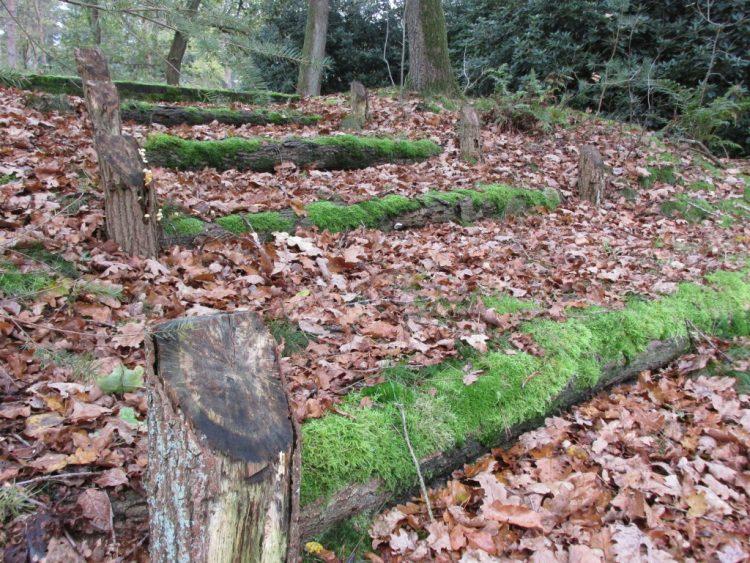 Trappetjes in je bosachtige of natuurlijke tuin