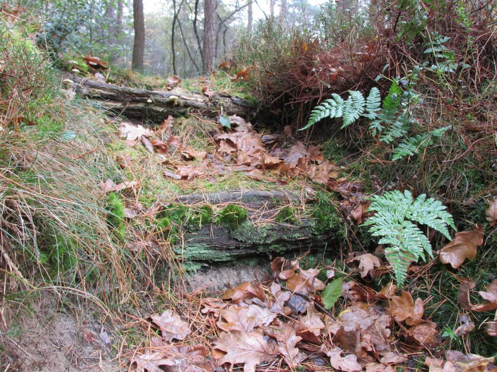 trap bos natuurlijke tuin