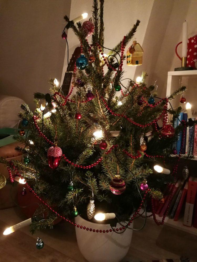 Zo blijft je kerstboom lang(er) mooi