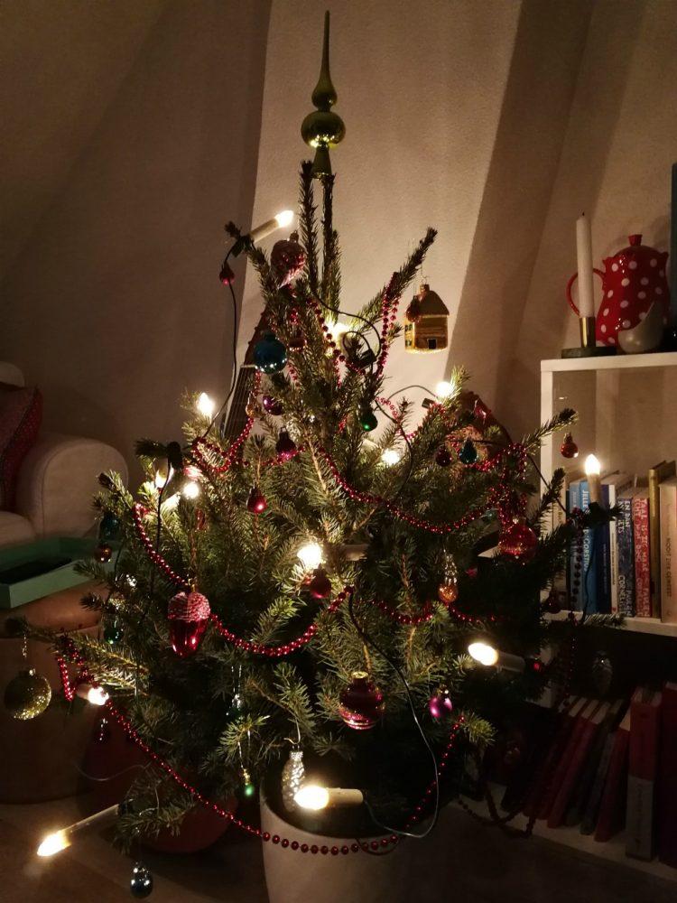 Kerstboom: welke soort kies je?