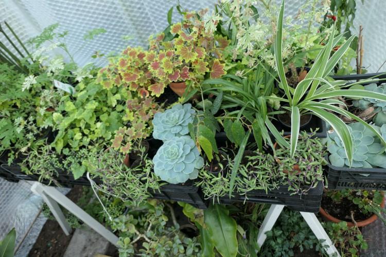 planten overwinteren kas