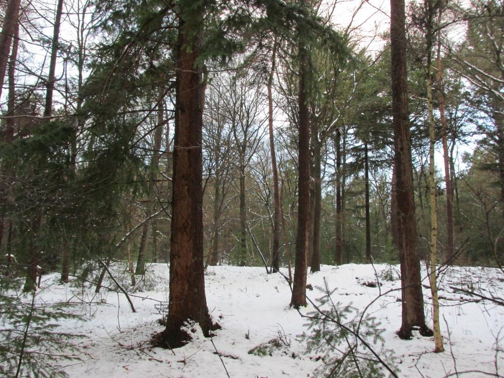 toekomstbomen bos