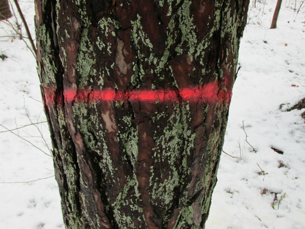 toekomstbomen rode streep