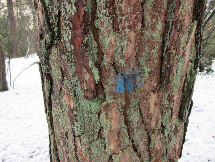 Toekomstbomen: dit betekent een stip of een streep verf op een boom
