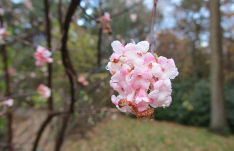Deze planten bloeien in januari