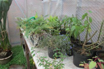 vorstvrije kas planten