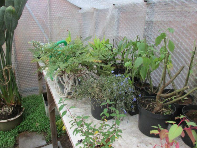 Tip: laat je planten overwinteren in een vorstvrije kas