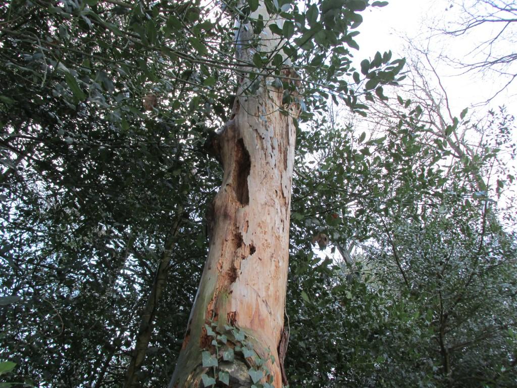 boom gaten specht