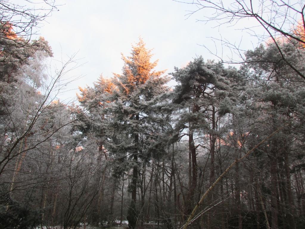parkbos sneeuw