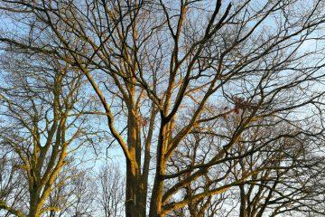 bomen kronen zon