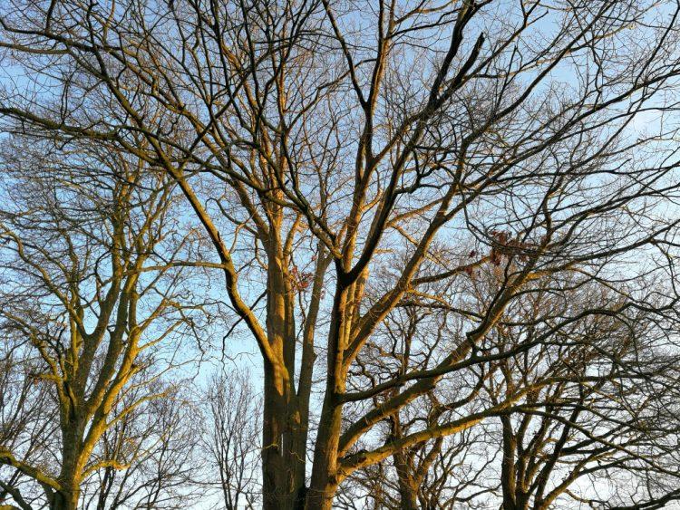 Bomen verplanten (verplaatsen): zo doe je dat